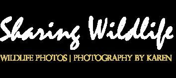 Sharing Wildlife
