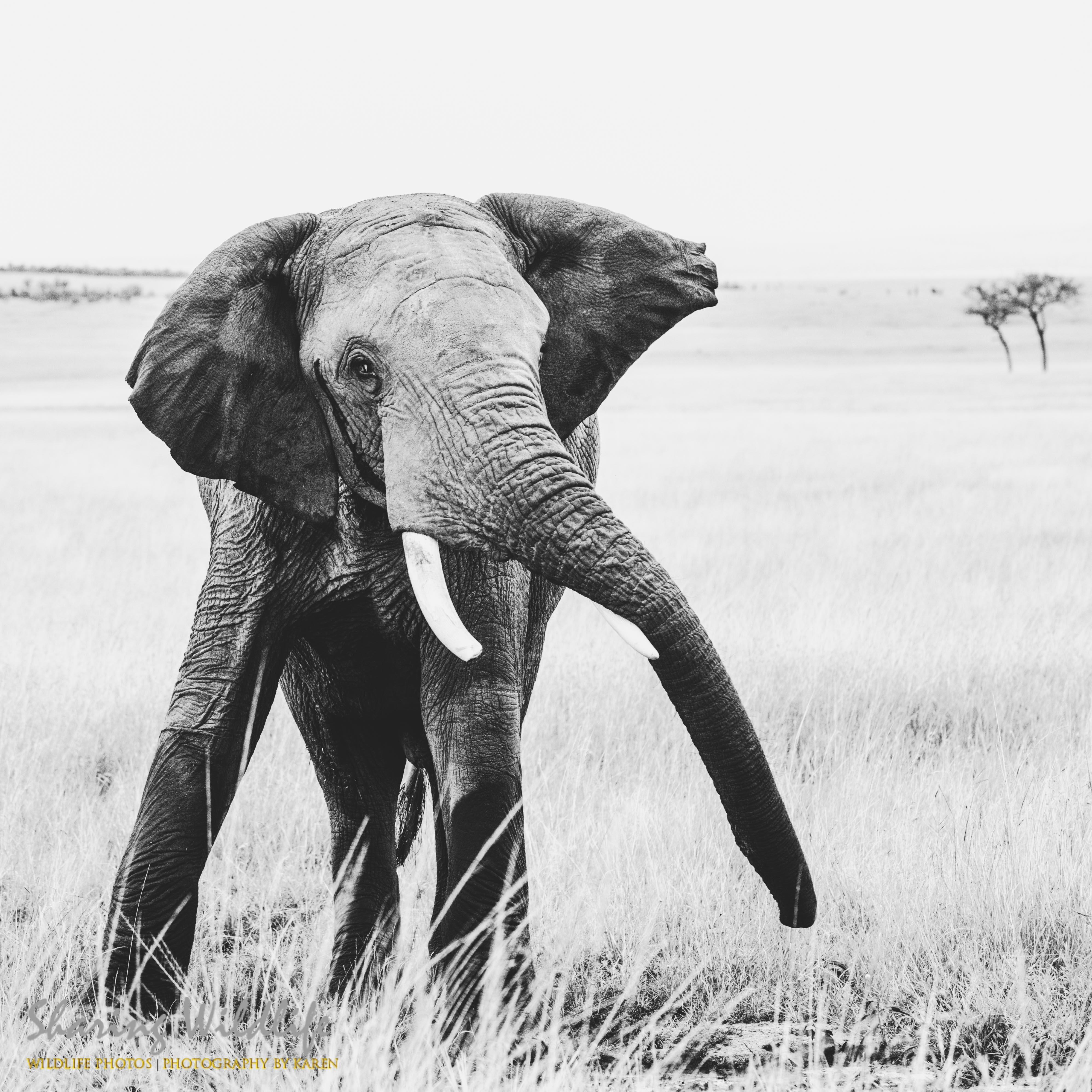 Daning Elephant