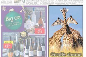 Giraffe chums get neck tied